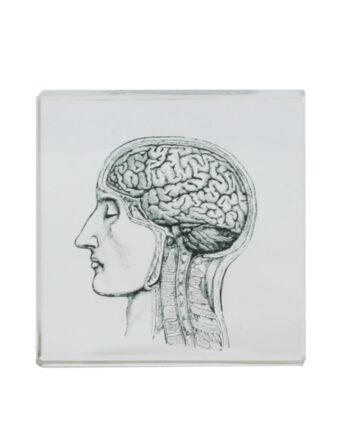 Brevpress Hjärna