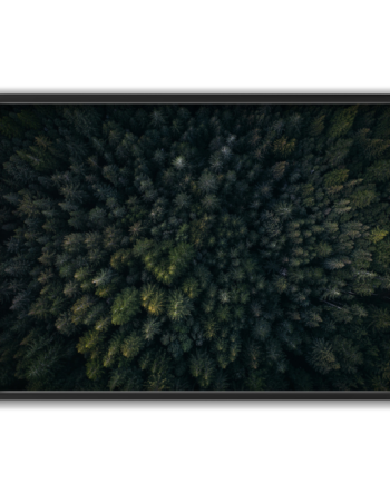 Forest from above poster 70x50