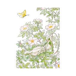Poster, 50x70 cm, Prinsessan Nyponblom