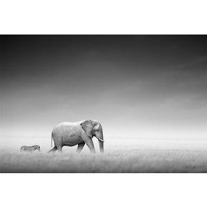 Poster Elefanter på savannen