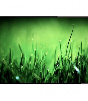 Poster - Högt gräs (50x70 cm)