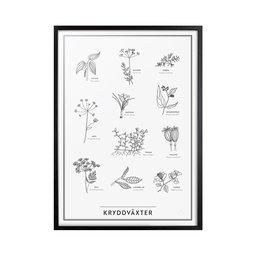 Poster Kryddväxter, 30x40 cm