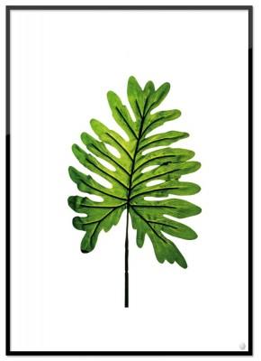 Poster - Monstera löv (21x30 cm)