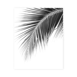 Poster palmblad, 40x50 cm